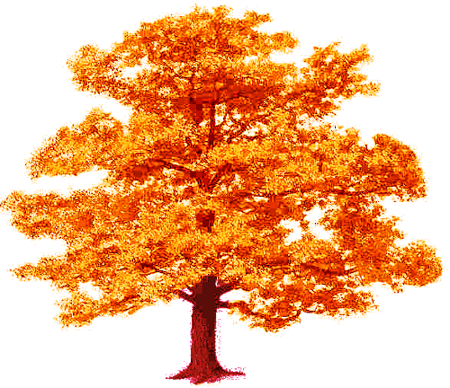 Tree Fall Png 500 432 Autumn Trees Vines Tree